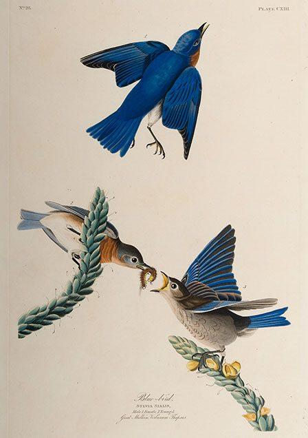 01_blue_bird