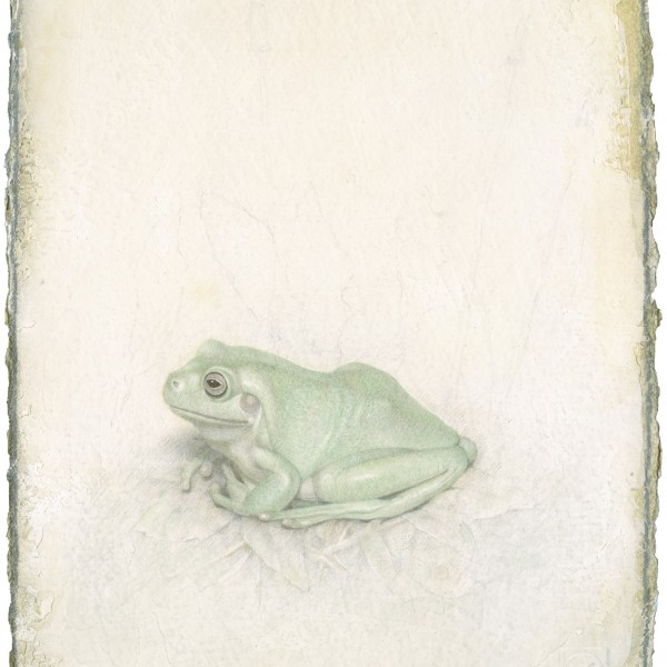 Victor Koulbak, Frog, 2009, Silverpoint, watercolor 12.5 x 10