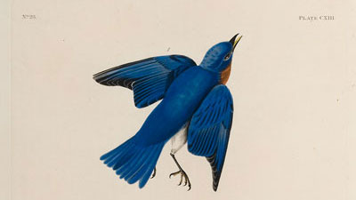 1992_Audubon-Blue-Bird
