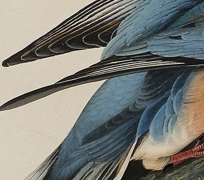 2014_4_audubon4