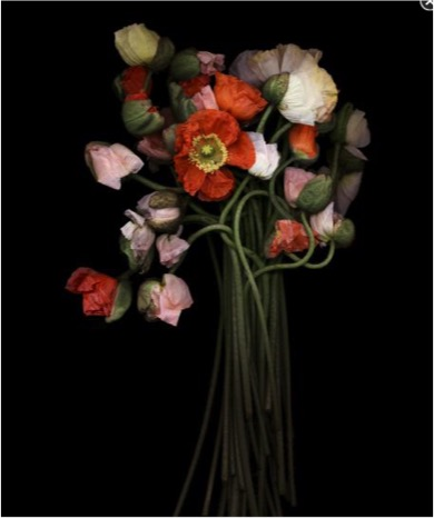 Joyce Tenneson (American, b. 1945) Poppy Bouquet, n.d. Edition: 5/25 Archival pigment print Courtesy of the artist