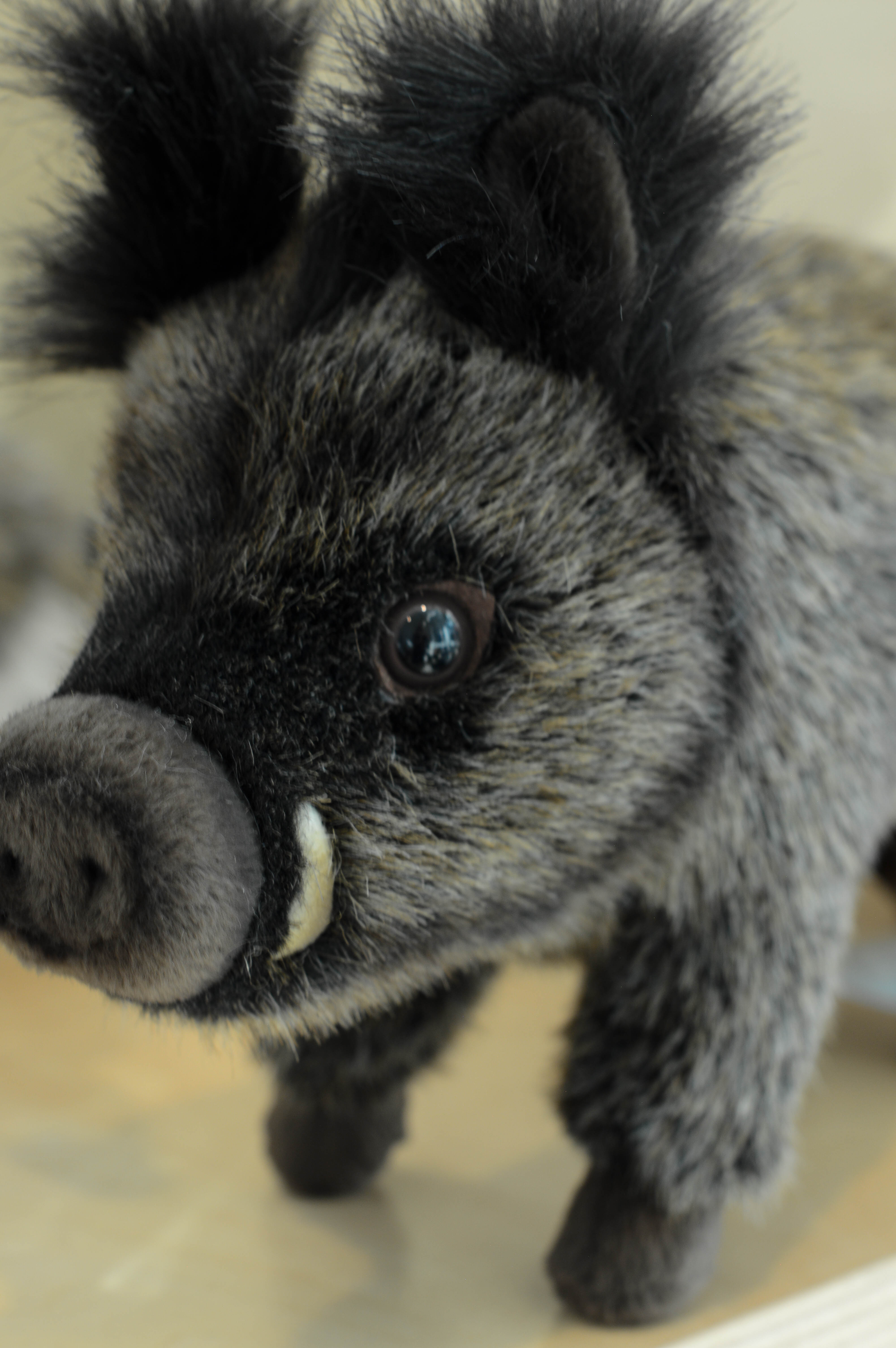 The Museum shop carries a stuffed boar in its Audubon Wilderness Outpost.