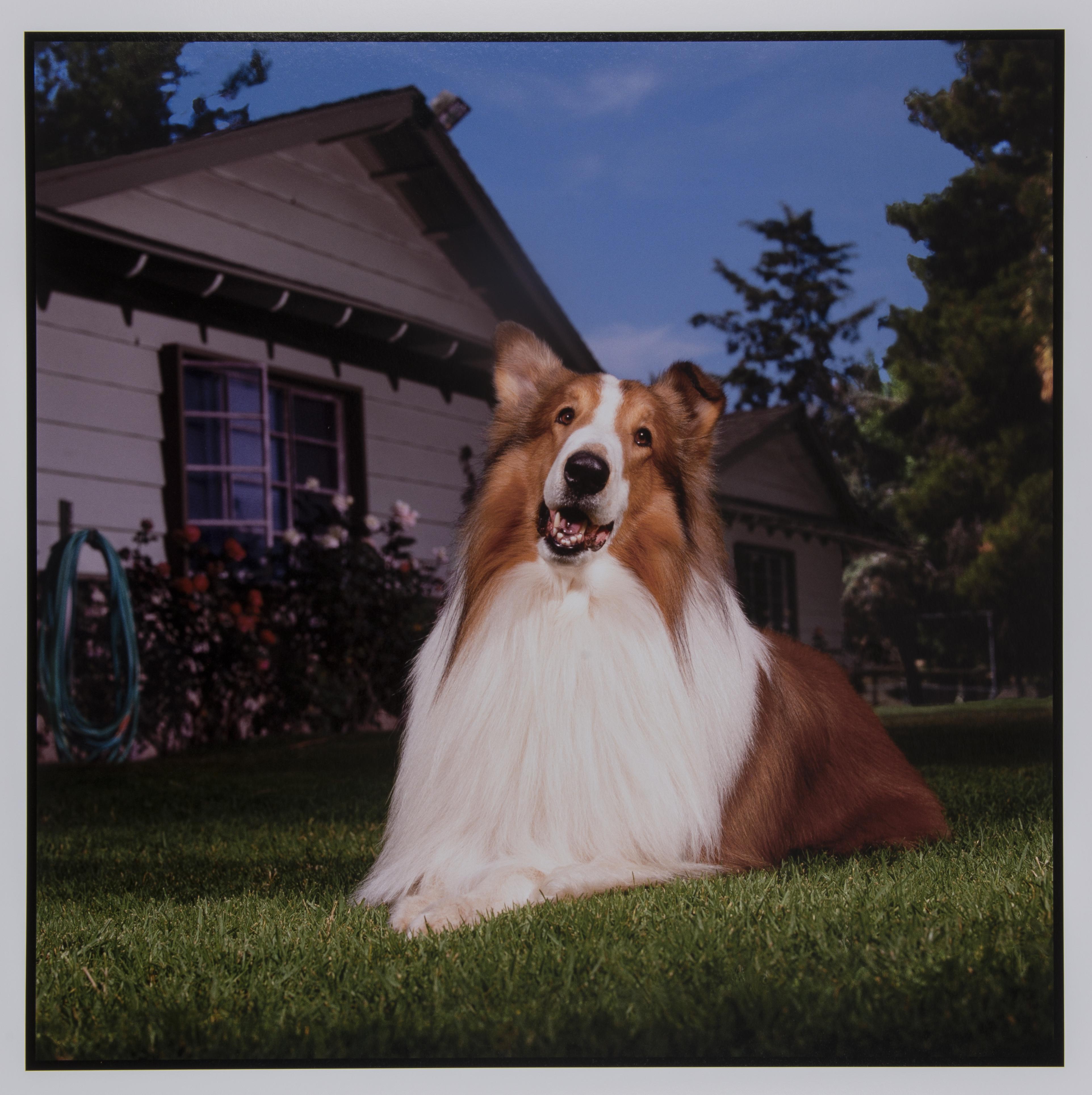 Bonnie Schiffman Lassie, 1988 Edition: artist's proof #2 Printed 2016 Archival inkjet print 20 x 20 inches
