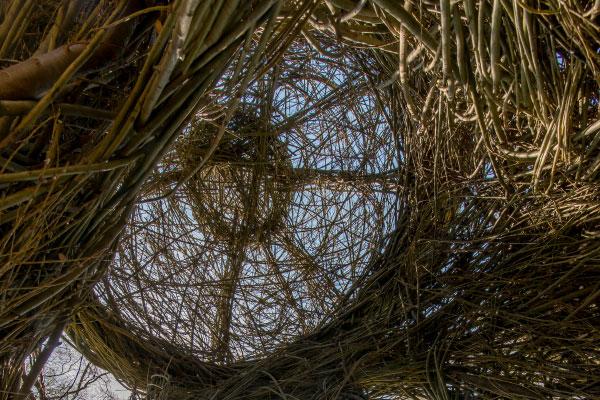 A Waltz in the Woods (detail), Patrick Dougherty Morris Arboretum of the University of Pennsylvania Philadelphia, Pennsylvania (2015