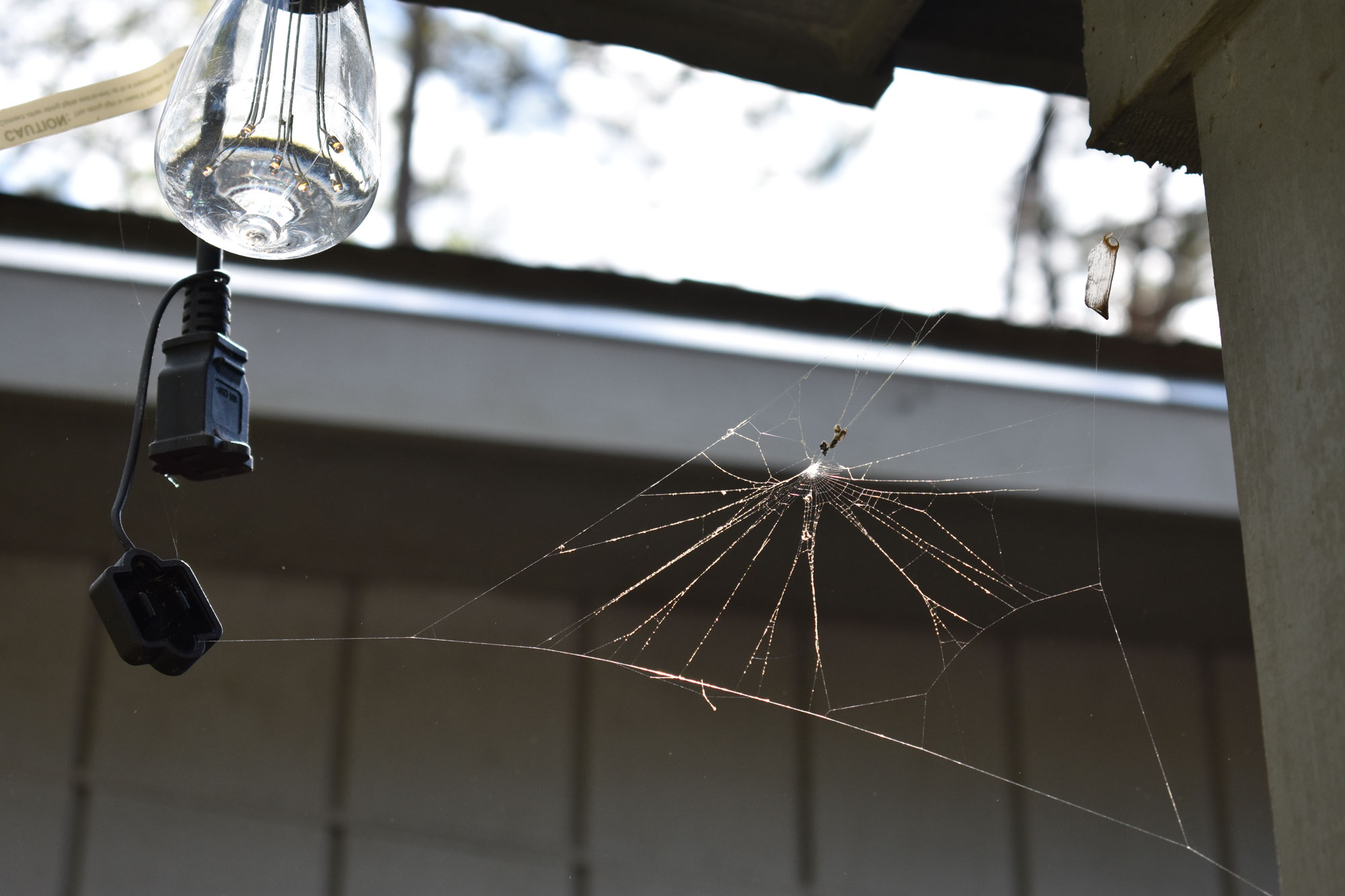 A spider web connects to a glass porch light.