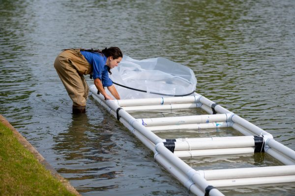 Graduate students prepare an experiment in the museum pond.